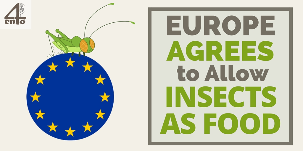 EU allows insects as foods
