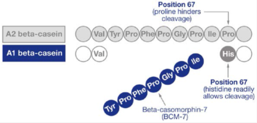 A1 y A2 betacaseína